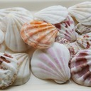 Beach Theme Shell Decorative Accessories (40 Pieces)